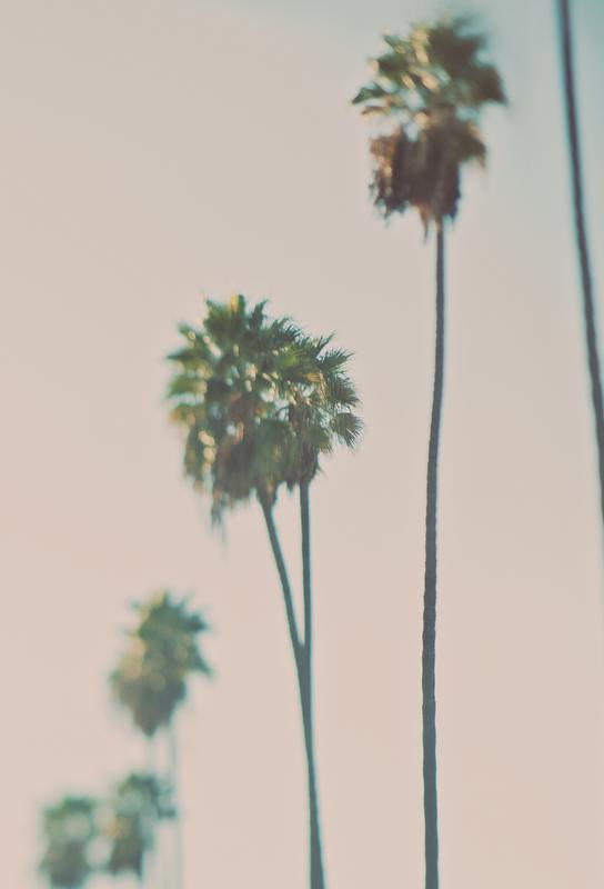 Blurry Palms Color Impression sur alu-Dibond