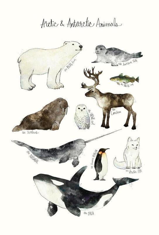 Arctic and Antarctic Animals Impression sur alu-Dibond