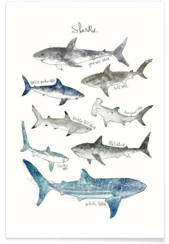 Haie-Illustration -Poster