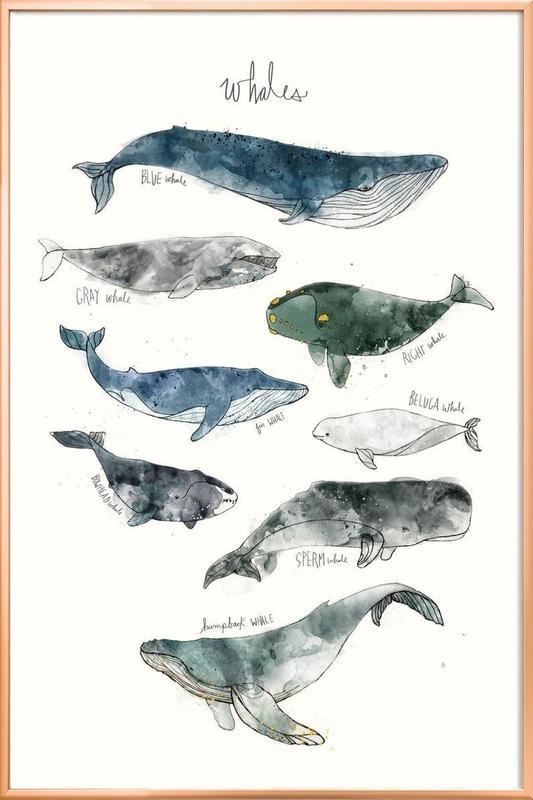 Whales -Poster im Alurahmen