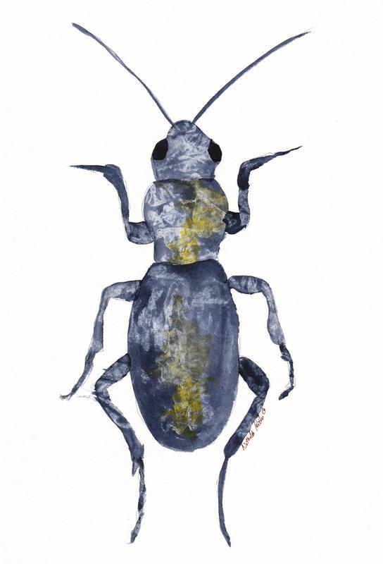 Hello Beetle Aluminium Print