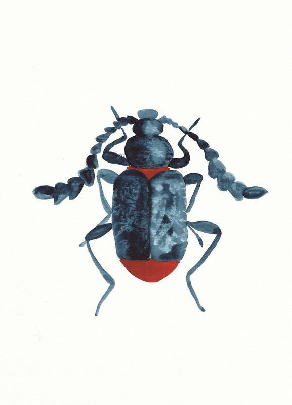 Blue Beetle -Leinwandbild