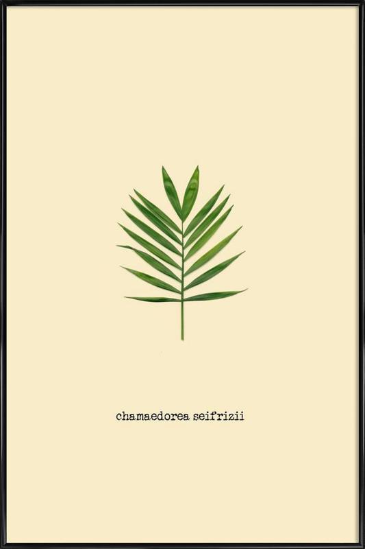 Chamaedorea Seifrizii -Bild mit Kunststoffrahmen