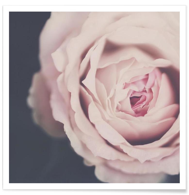 Rose Pink -Poster
