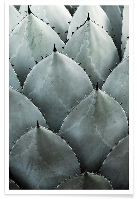 Photographie d'agave affiche