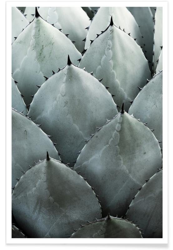 Agave Photograph Poster