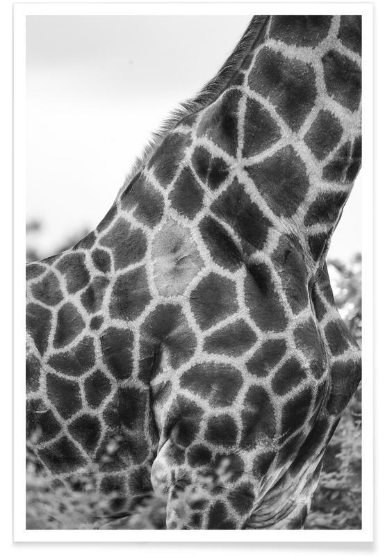 Giraph detail affiche