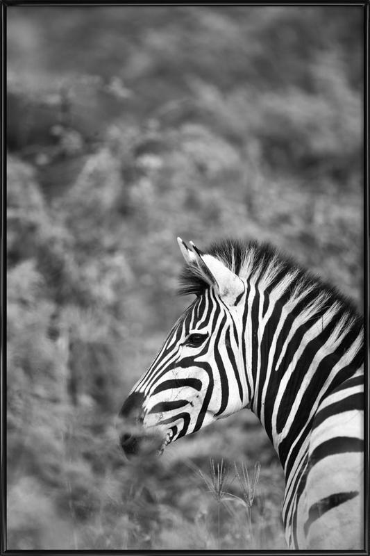 Zebra -Bild mit Kunststoffrahmen