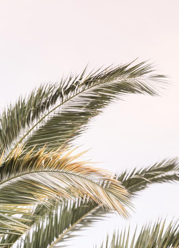Oasis Palm 3 Canvas Print