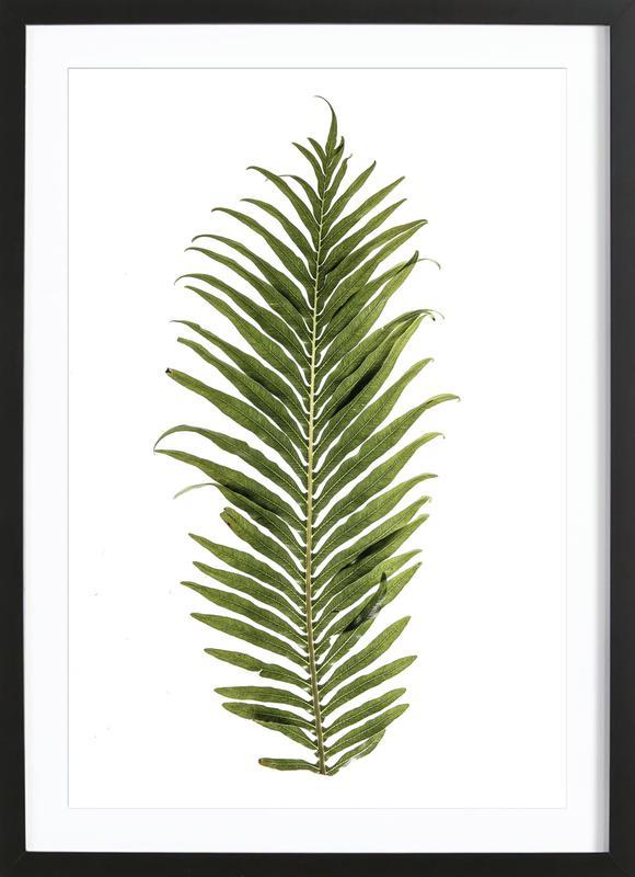 Leaf Study 1 -Bild mit Holzrahmen