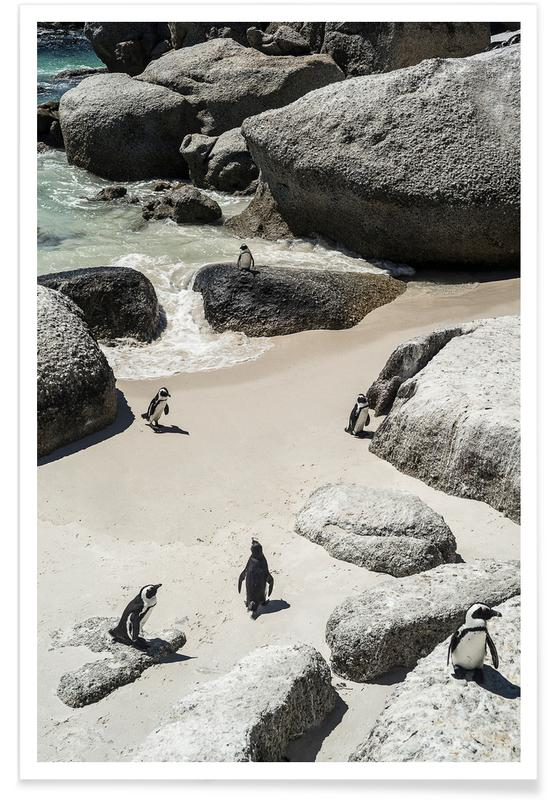 Penguins Beach Poster