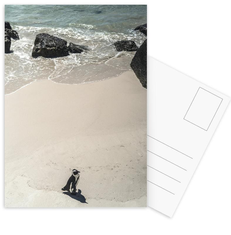 Solo Penguin Postcard Set