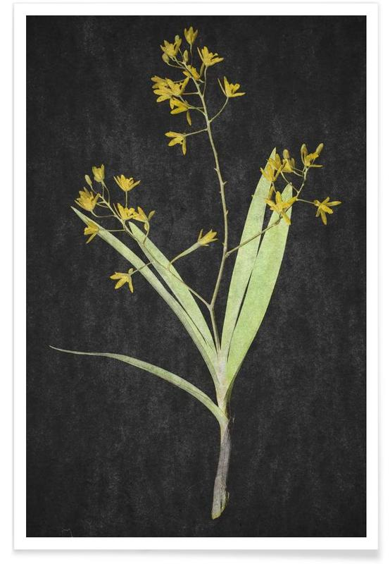 Muti Orchid -Poster