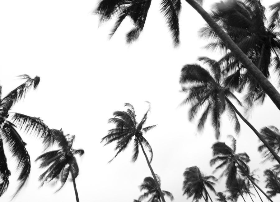 Pemba Palms Canvas Print