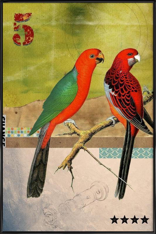 Animals: Birds Framed Poster
