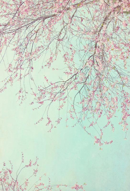 Day Dreamer -Acrylglasbild