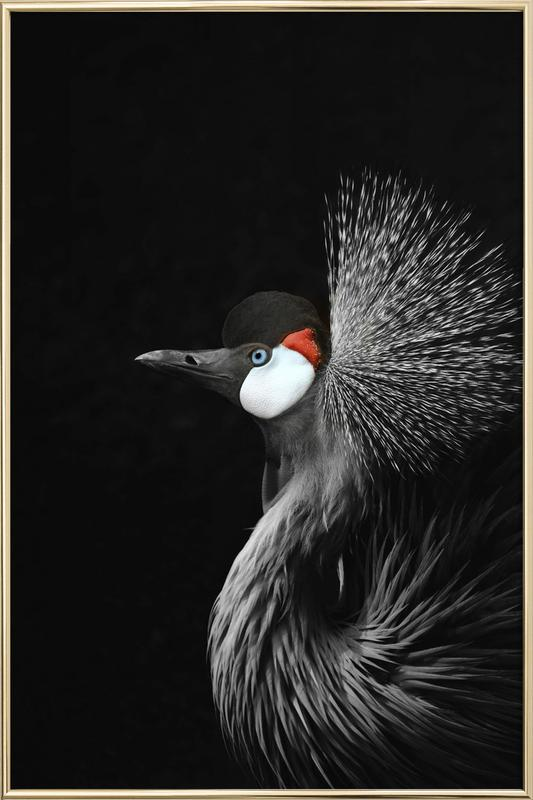 Black Crowned Crane Poster in Aluminium Frame