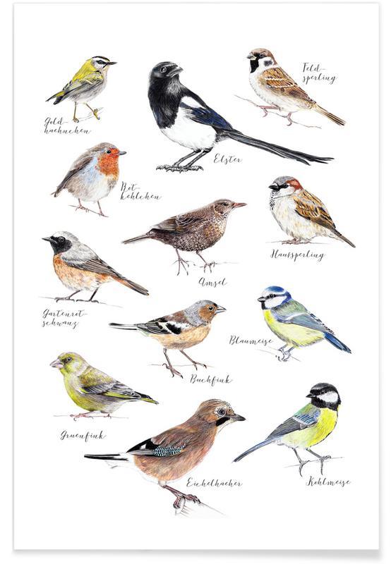 Plakat Vögel Poster