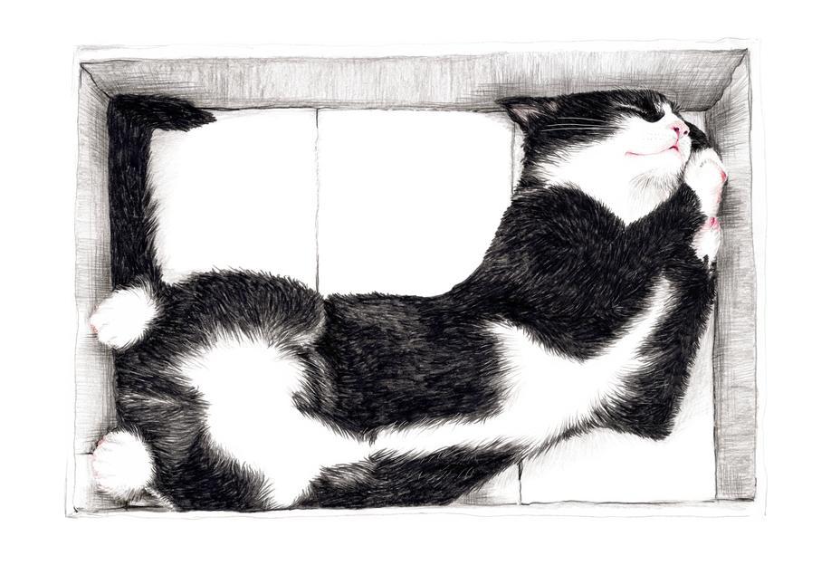 Katze im Karton -Alubild