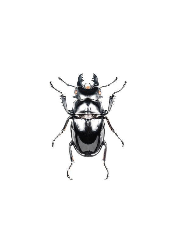 Odontolabis Siva -Leinwandbild
