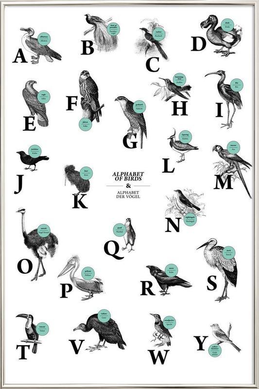 alphabet of birds, animal ABC Poster in Aluminium Frame