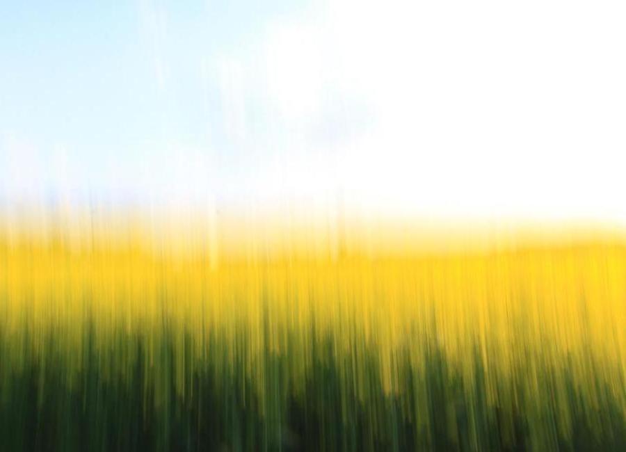 Fields Of Gold 01 canvas doek