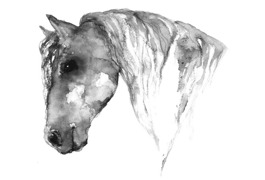 Grey Horse acrylglas print