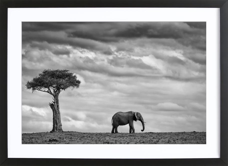 Elephant Landscape - Mario Moreno affiche sous cadre en bois