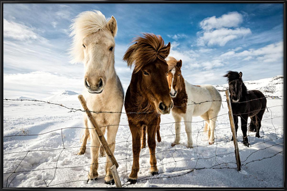 Icelandic Hair Style - Mike Leske Framed Poster
