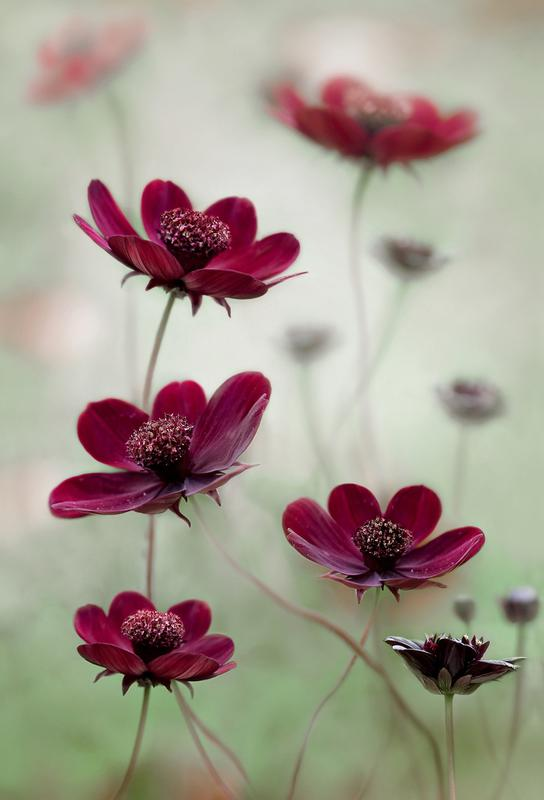 Cosmos Sway - Mandy Disher -Alubild