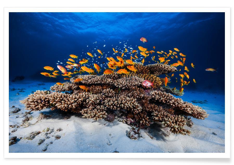 Marine Life - Barathieu Gabriel -Poster
