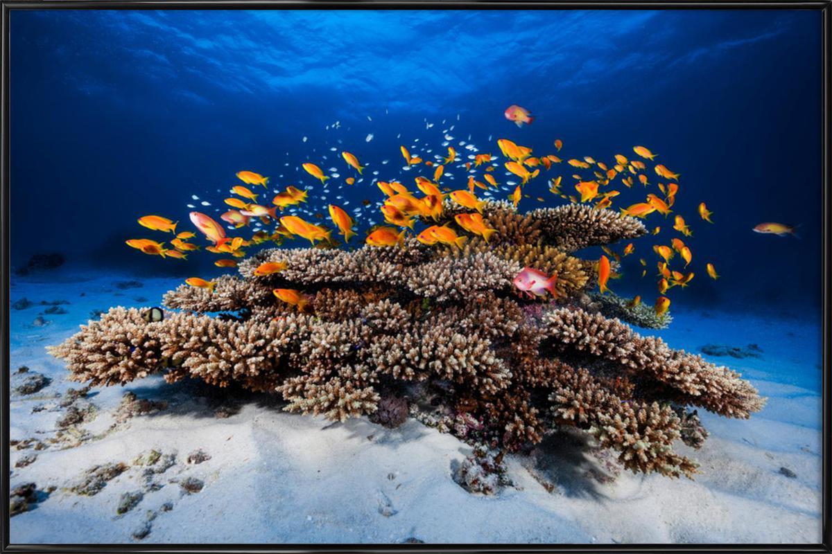 Marine Life - Barathieu Gabriel -Bild mit Kunststoffrahmen