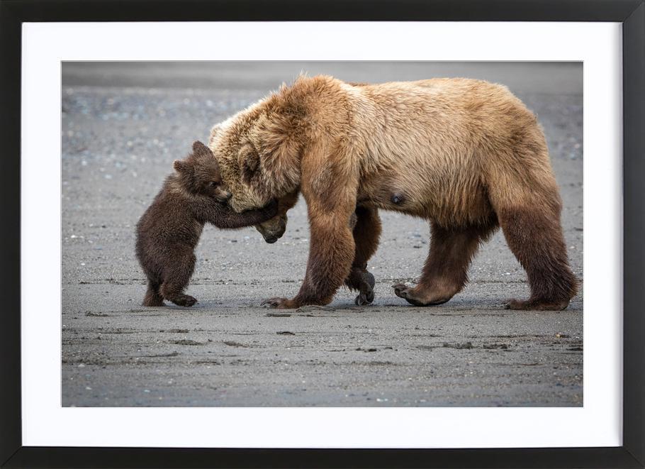 A Little Bear Hug - Renee Doyle -Bild mit Holzrahmen