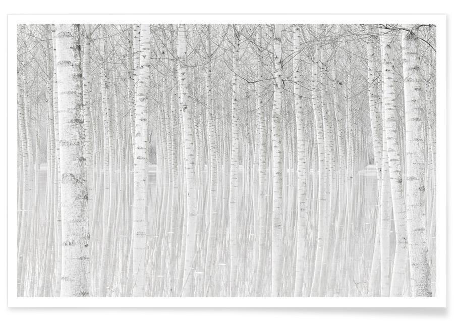Trees - Aglioni Simone poster