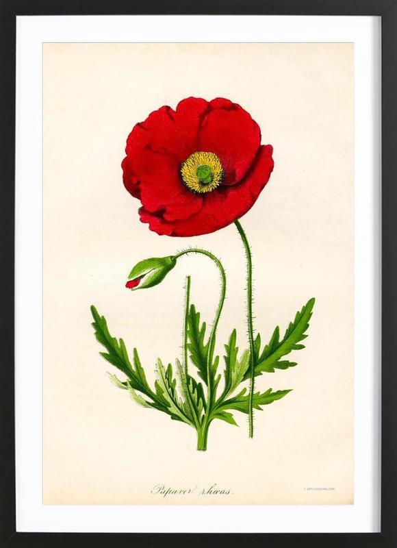 Papaver Rhoeas, Red Poppy -Bild mit Holzrahmen