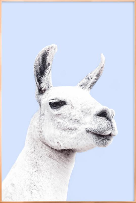 Blue Llama II affiche sous cadre en aluminium