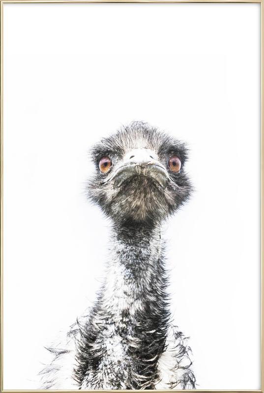 Emu affiche sous cadre en aluminium