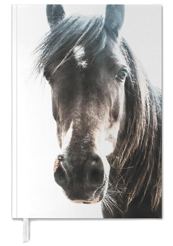 Horse agenda