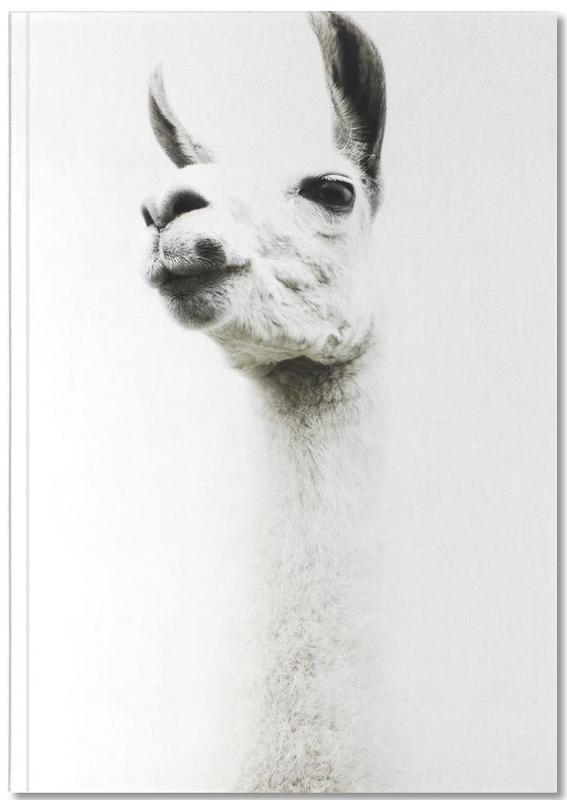 Llama I Notebook