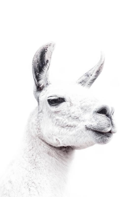 Llama II tableau en verre