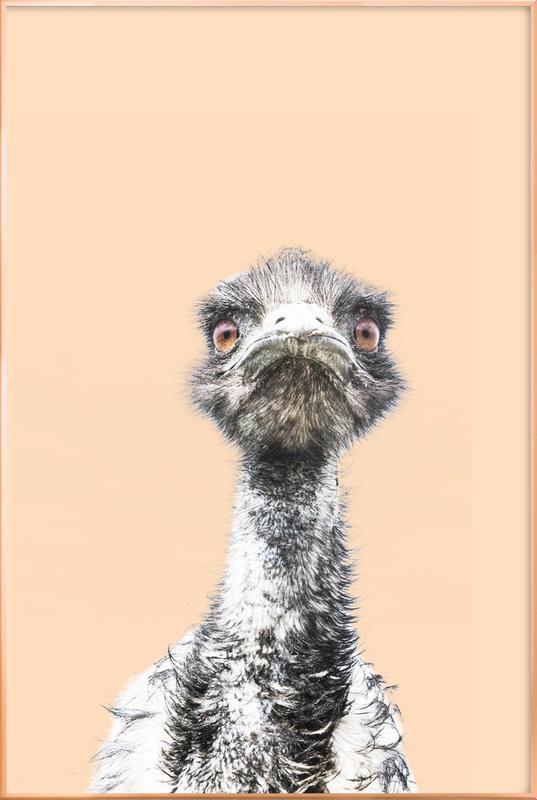 Orange Emu affiche sous cadre en aluminium