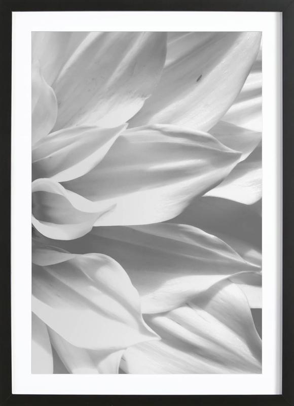 White Petals Framed Print