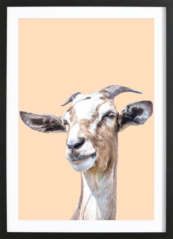 Orange Goat Framed Print