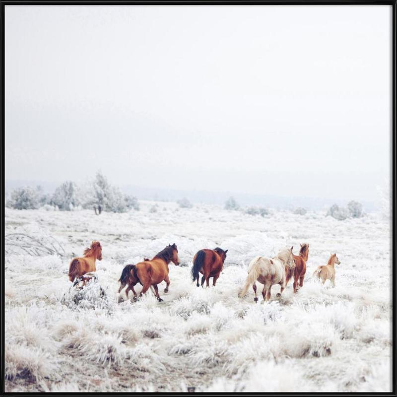 Winter Horses affiche encadrée