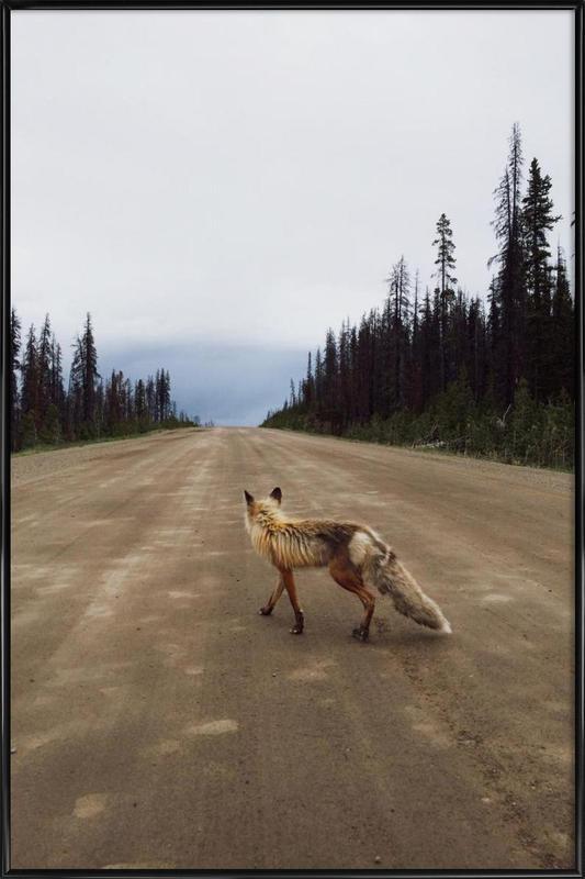 Road Fox affiche encadrée
