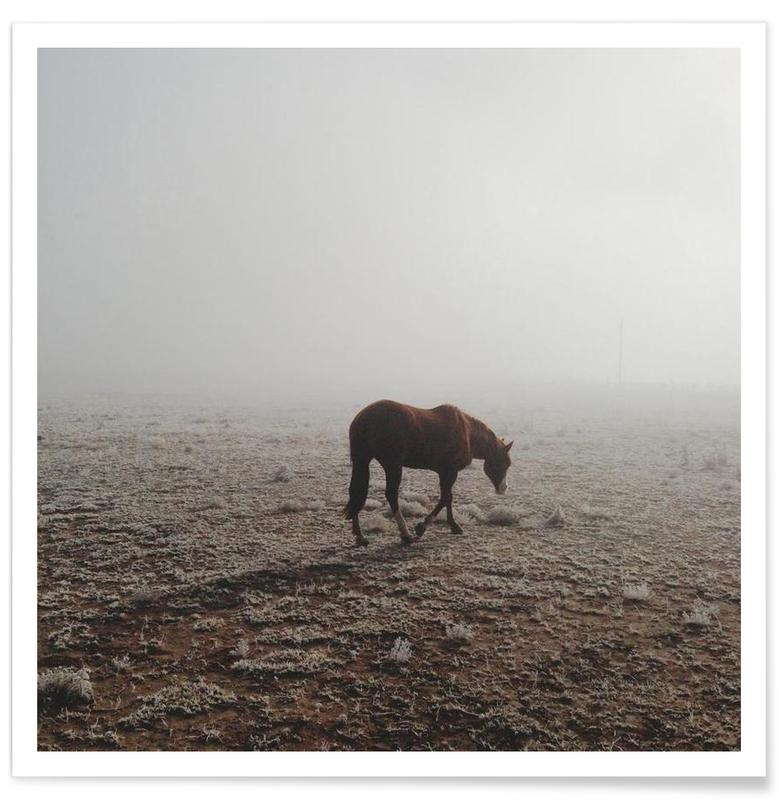 Fogged Horse affiche