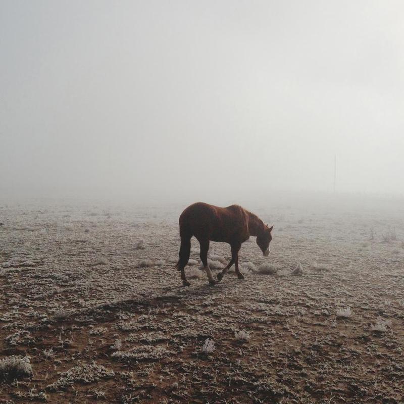 Fogged Horse -Alubild