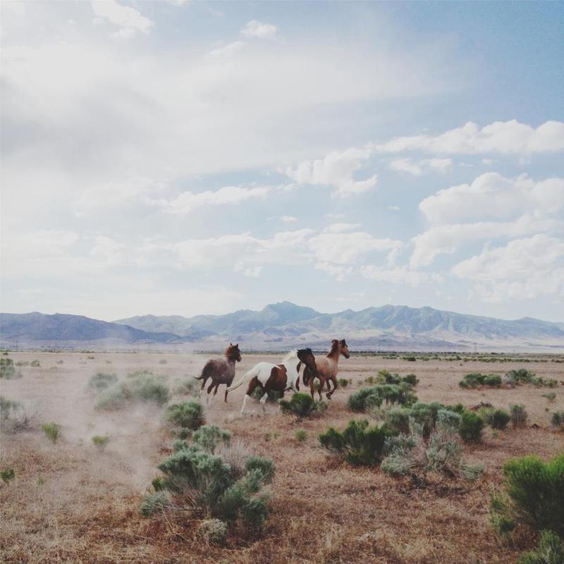 Running Horses Impression sur alu-Dibond