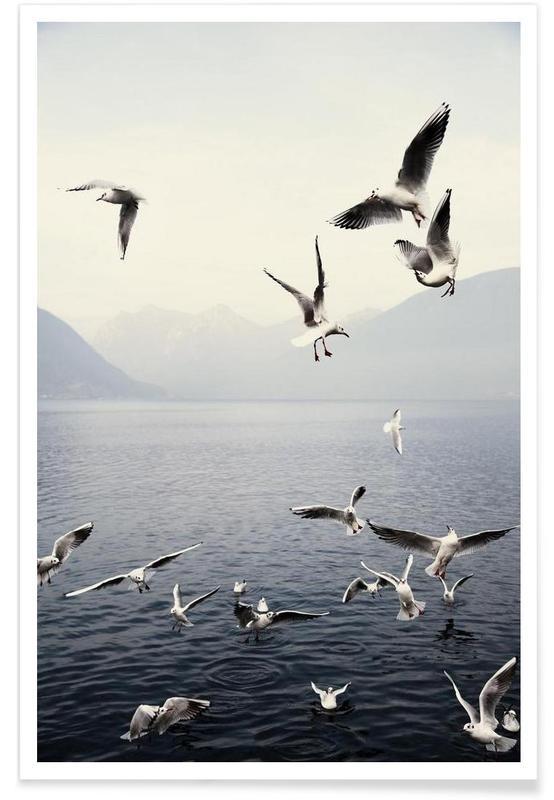 Seagulls Photograph Poster