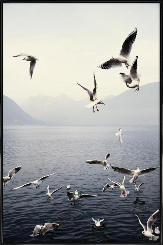Seagulls affiche encadrée